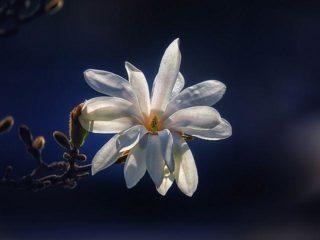 bloem met zwarte achtergrond
